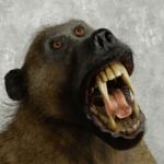 Грозный бабуин. Обезьяна, наводящая страх на крупных хищников