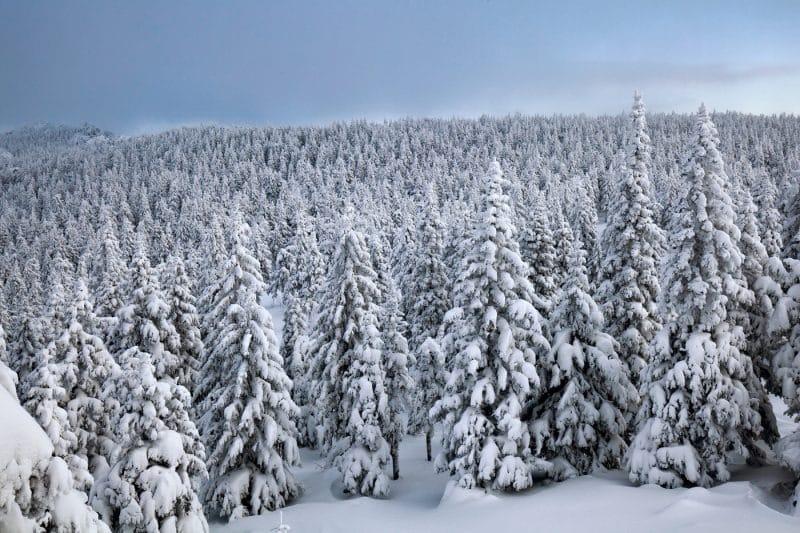 Сильные морозы ожидаются в январе на большей части России