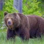 Как славяне могли называть медведя по-настоящему